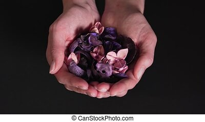 Aromatherapy - beautiful dry flowers in women's hands isolated on a black background. Natural medicine and natural therapy. Close-up 4k
