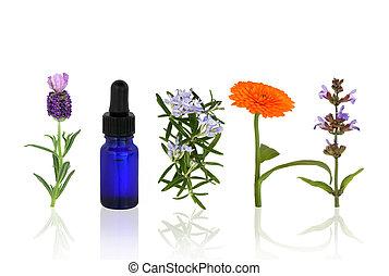 aromatherapy, keukenkruiden, en, bloemen
