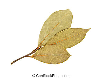 Aromatic bay laurel leaves on a white background