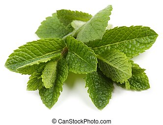 Aromatic, fresh leaves of green mint on a white background.