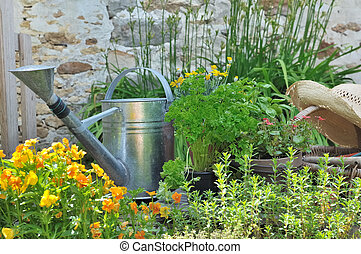 aromatic herbs and accessories for gardening - watering can...