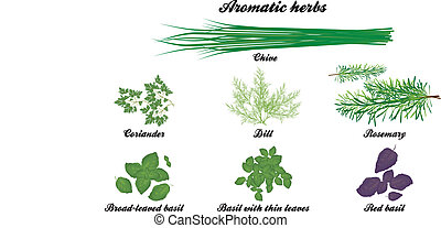 Aromatic herbs poster with all descriptions in english