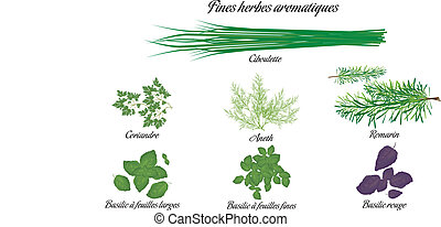 Aromatic herbs poster french - Aromatic herbs poster with...
