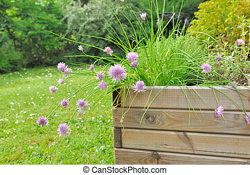 aromatic plant in planter - planter of aromatic plants with...