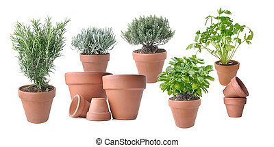 potted with terracota pots