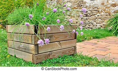 aromatic plants in planter - planter of aromatic plants with...