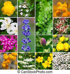 aromatique, fleurs, frais, -, ensemble, collection, plante, médicinal