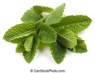 aromatique, frais, mint.