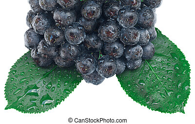 Aronia Fruit Cutout - Aronia Fruit Isolated with Clipping ...