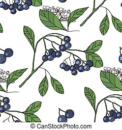 aronia,chokeberry,dark,blue,sweet,fresh,botanical,tasty,organic,white,green,leaf,berry,hand drawn,hand,color,fruit,shrub,bush,gardening,nature,floral,flower,plant,garden,vector,draw,picture,illustration,clip,art,element,design,style,beautiful,background,pattern,tile,wrap,endless,texture,fabric,seamless,wallpaper,paper,textile,repeat,ornament