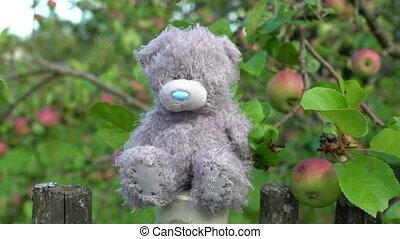 around., стиль, концепция, старый, яблоко, забор, нет, воспоминания, сидящий, дерево, ностальгия, медведь, грустный, страна, background., зеленый, toys, боковая сторона, один, серый, заброшенный