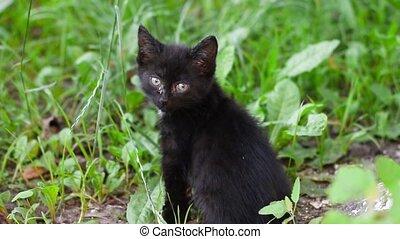 around., herbe, regarde, chaton, encore, noir, frais, yeux, bleu, séance, sale