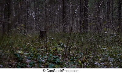 Around view in the forest stumps in late autumn