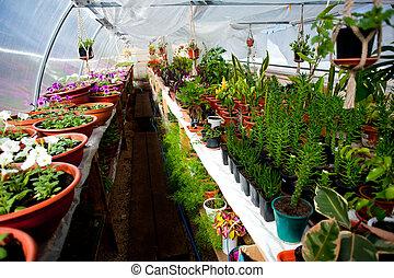 arqueado, flores, filas, estufa, venda