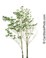 arquivo, isolado, de, árvore, planta, com, verde sai, ramo, branco, fundo, uso, para, natureza, decorado, objeto, parque, e, jardim