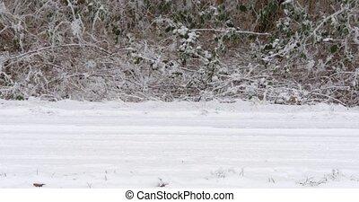 arrêt, voiture, route, neigeux