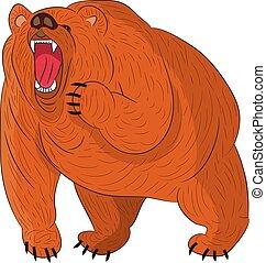 arrabbiato, growls, grizzly, (brown), fondo., cartone animato, bianco
