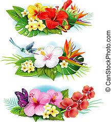 arrangement, depuis, fleurs tropicales