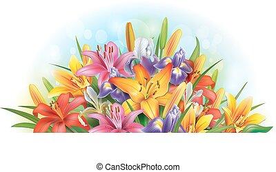 arrangement, lis, iris