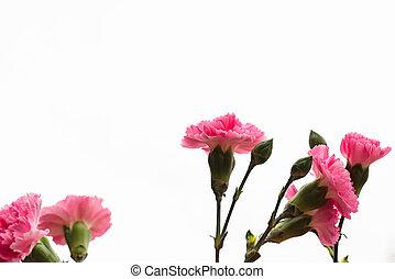 Arrangement of beautiful pink divine flowers blooming in...