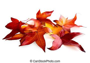 Arrangement of colourful leaves