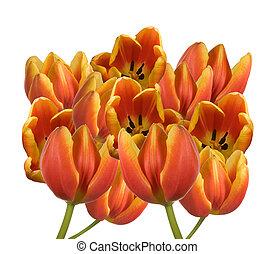 arrangement of fresh tulips