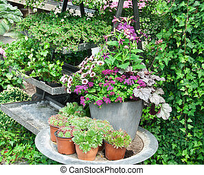 Arrangement of plants and flowers in a greenhouse
