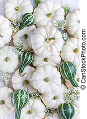 Arrangement with small white and green pumpkins for Thanksgiving