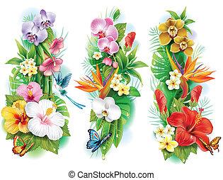 arranjo, de, flores tropicais, e, folhas