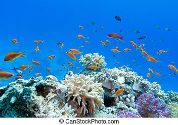 arrecife, coral, exótico, peces, plano de fondo, suave, ...