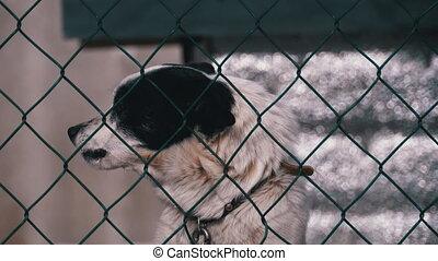 arrière-cour, barrière, winter., derrière, gens, chien, ...