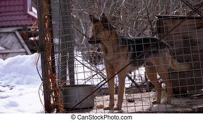 arrière-cour, cage, aboiements, winter., chien garde