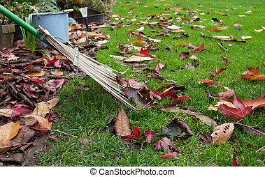 arrière-cour, feuilles, râteau