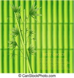 arrière-plan., bambou, vecteur, vert, moderne