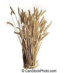 arrière-plan., blanc, blé