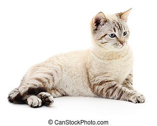 arrière-plan., blanc, chaton