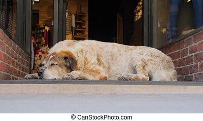 arrière-plan., door., beau, day., noël, chien, occupé, entrée, animal, side., dormir, verre, ville, fonctionnement, achats, vie