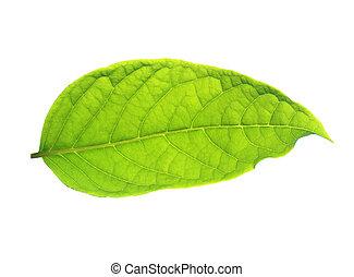 arrière-plan., feuilles, blanc vert