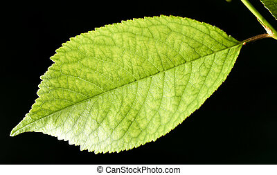 arrière-plan., feuilles, noir, fin