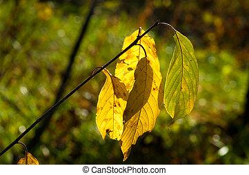 arrière-plan., feuilles, texture, automne