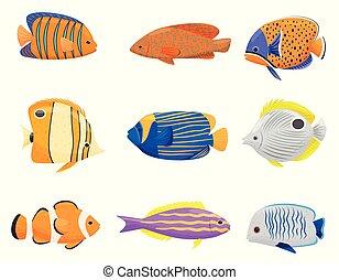 arrière-plan., fish, blanc, collection, coloré