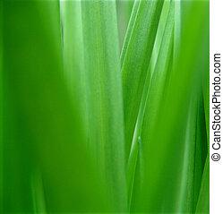 arrière-plan., herbe