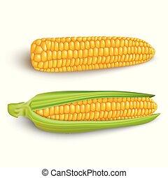 arrière-plan., maïs, blanc, épis