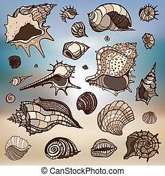 arrière-plan., set., coquilles, mer, brouillé