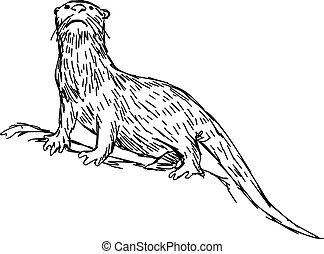 arrière-plan., vecteur, clawless, isolé, main, dessiné, blanc, africaine, loutre, illustration, croquis