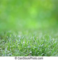 arrière-plan vert