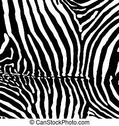 arrière-plan., zebra, vector.