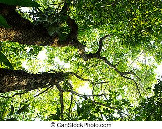arrière-plans, bois, arbres., forêt verte, nature, lumière soleil