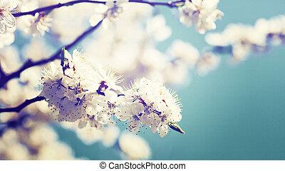 arrière-plans, fleur, abricot, résumé, arbre, naturel