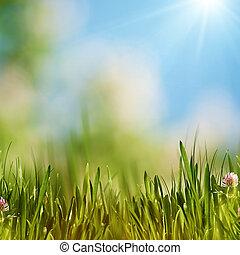 arrière-plans, naturel, clair, été, afternoon.